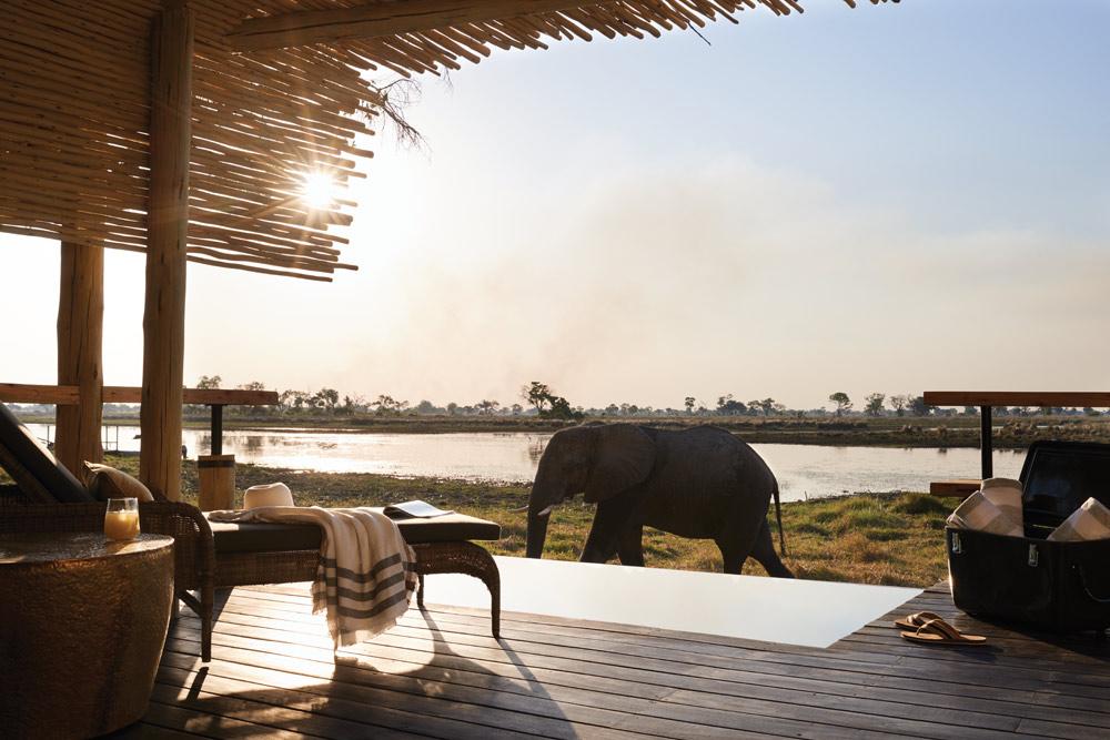 WildlifeBelmond SafarisBotswana