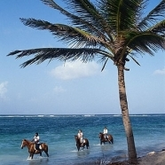 Horseback Riding in the Water