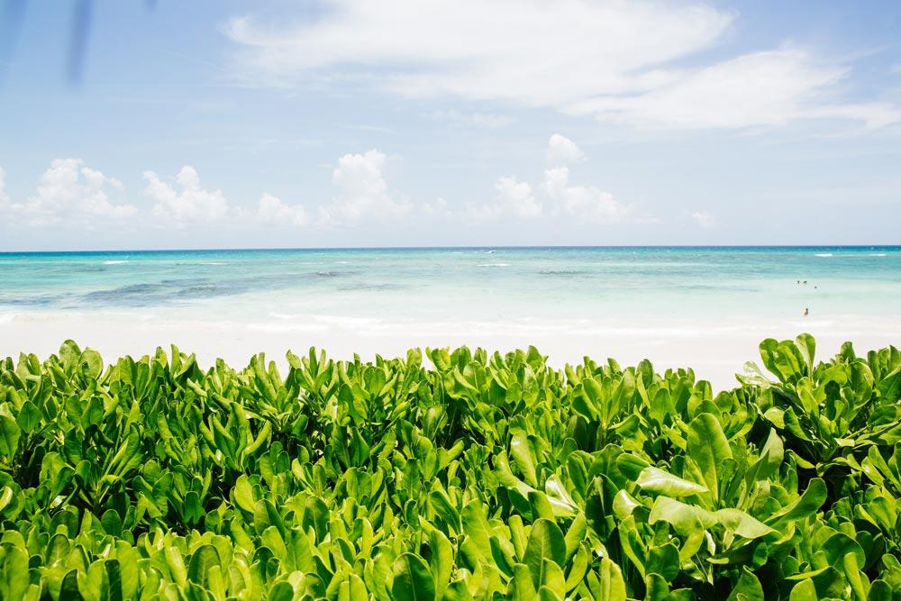 Esencia, Playa del Carmen, Quinta Roo, Mexico