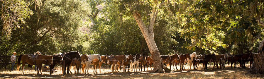 Horse Activity at Alisal Guest Ranch and Resort SolvangCA