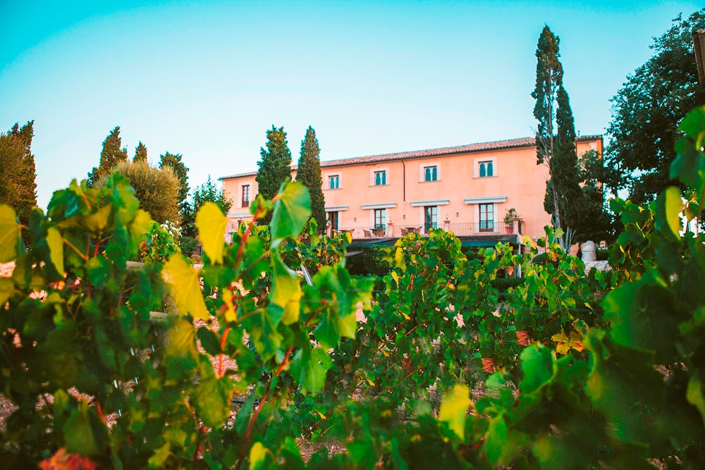 Vineyard at Son Julia Country House HotelBalearesSpain