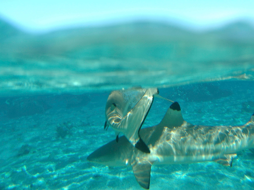 Underwater Adventures at Sofitel Bora Bora MararaBora BoraFrench Polynesia