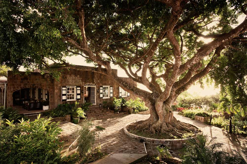 Tree and Greathouse at Montpelier Plantation Inn West IndiesSt. Kitts and Nevis