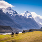 Explore on Horseback at Azur LodgeQueenstown