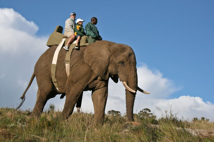 Fancourt Elephant Tour