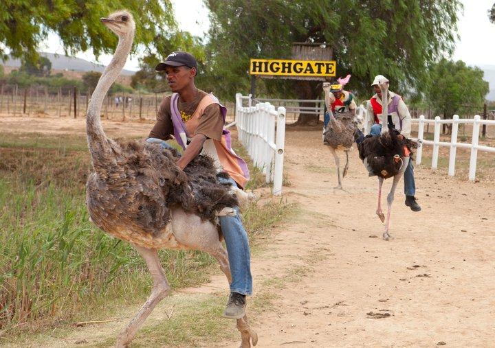 Fancourt Ostrich Tour
