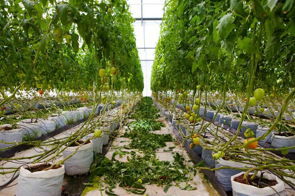 Greenhouse at El Dorado Royale Spa Resort