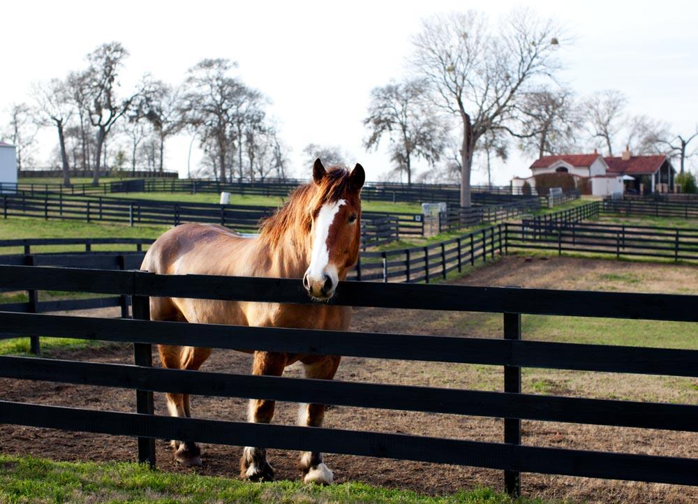 Equestrian activities at The Inn at Dos Brisas