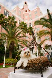 Don CeSar Pet Program