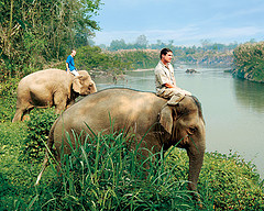 Elephants at Four Seasons Tented Camp, Thailand