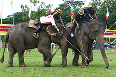Elephant Polo at Anantara Resort