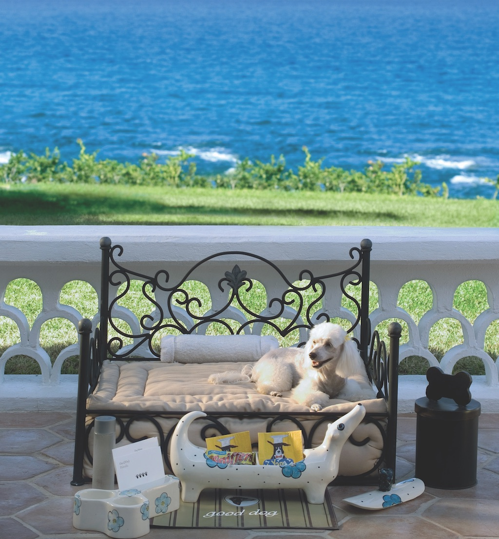 Dog at One&Only Palmilla