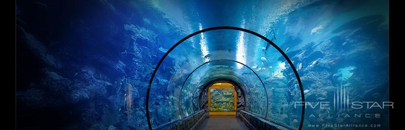 Mandalay Bay Resort and CasinoShark Reef