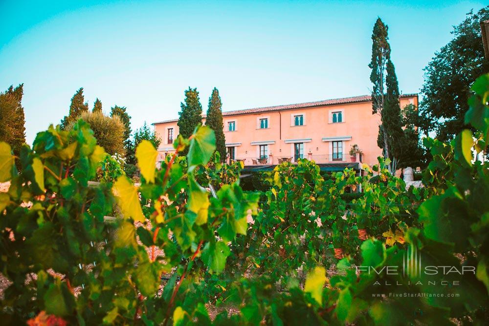 Vineyard at Son Julia Country House Hotel, Llucmajor, Baleares, Spain