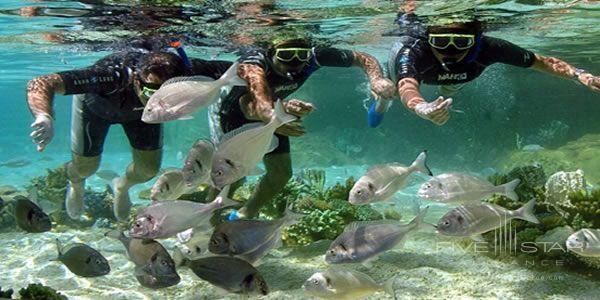 Mardan Palace Swim Reef