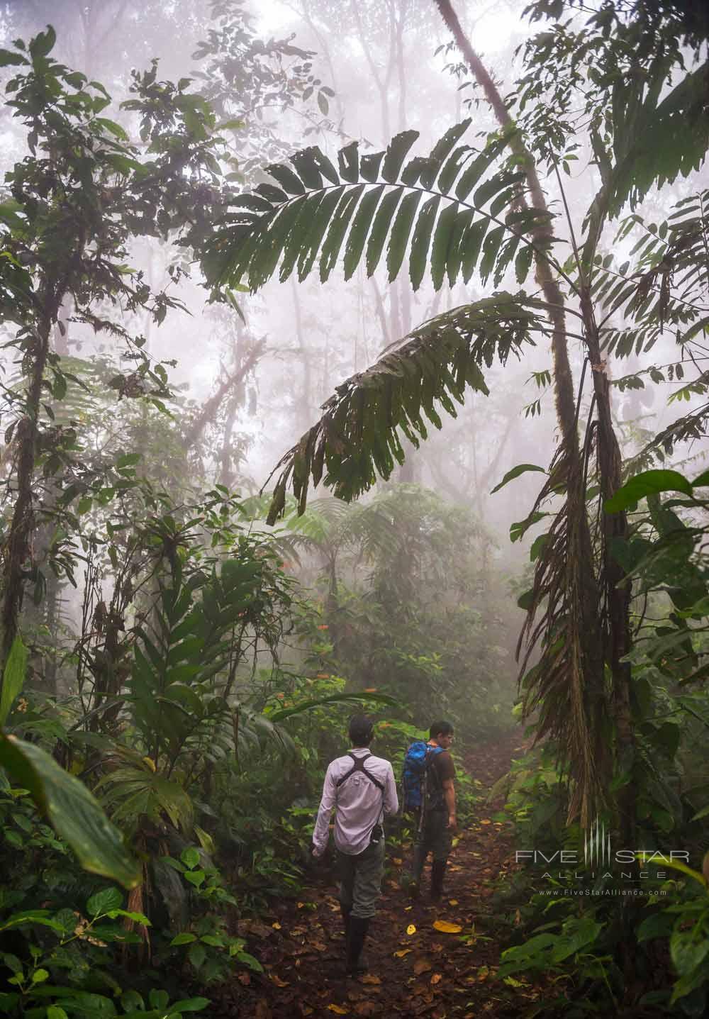 Walk through the jungle in The Choco Rainforest Mashpi Lodge, Ecuador