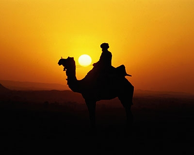 Sunset Camel Ride