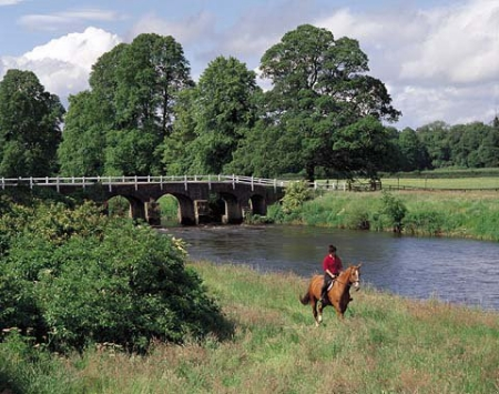 White Bridge with Horse on Trail Ride