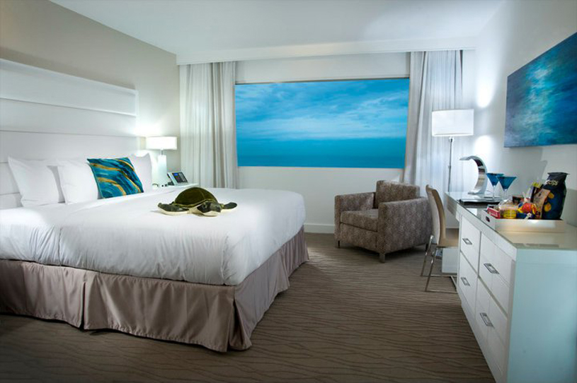 B Ocean Fort Lauderdale Supports Sea Turtles Five Star Alliance