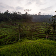 The Westin Ubud Resort and Spa
